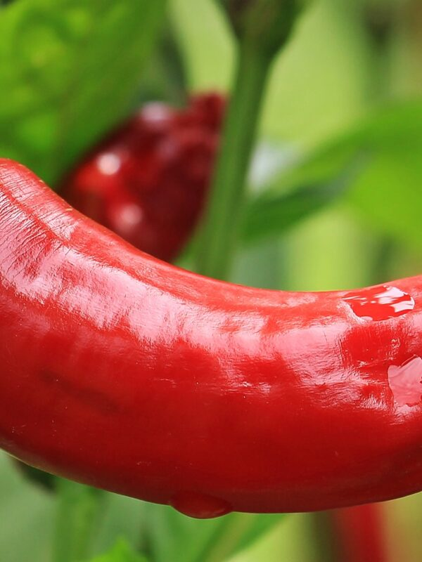Can caffeine and chilli assist in weight loss?